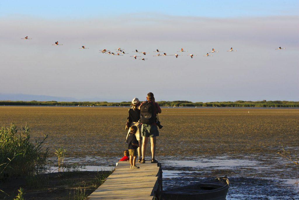 Observació-aus-PN-Delta-Ebre.-Llacuna-del-Garxal
